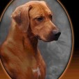 Redfords sire: CH Of Afrikka Spring Valley Dorian Grey