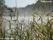 Fräkenviken vid Bodalen, vass, dimma