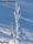 T081 Rimfrost