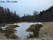 isläggning på Timmermons våtmark 1