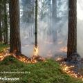 Naturvårdsbränning_Fräkenkärret_160524_2_Per_Folkesson_1200px
