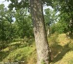 Målbild för Ekskogen bakom Bodalen
