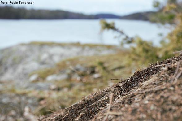 Ännu ett vårtecken på myror i full gång.