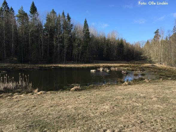 Våtmarken vid Timmermon anlades 2013. Det har gynnat grodor, salamandrar och en del fåglar.