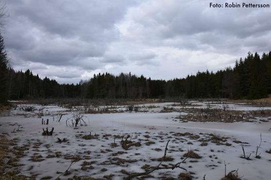 Våtmarken vid Stocksund . Har den något namn?