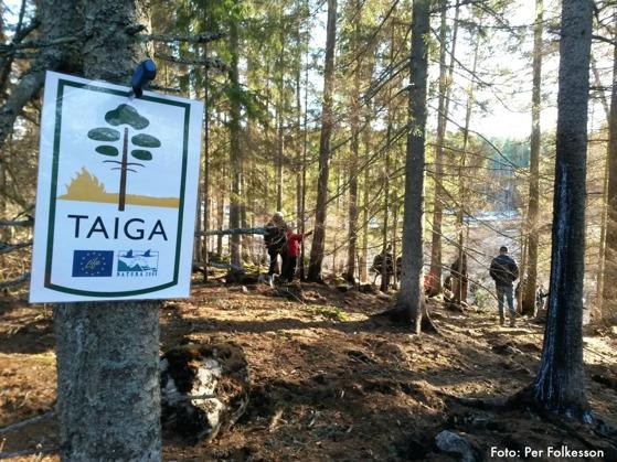 Naturvårdsbränningen är en del av projektet LIFE Taiga, som delfinansieras av EU's naturvårdsfond