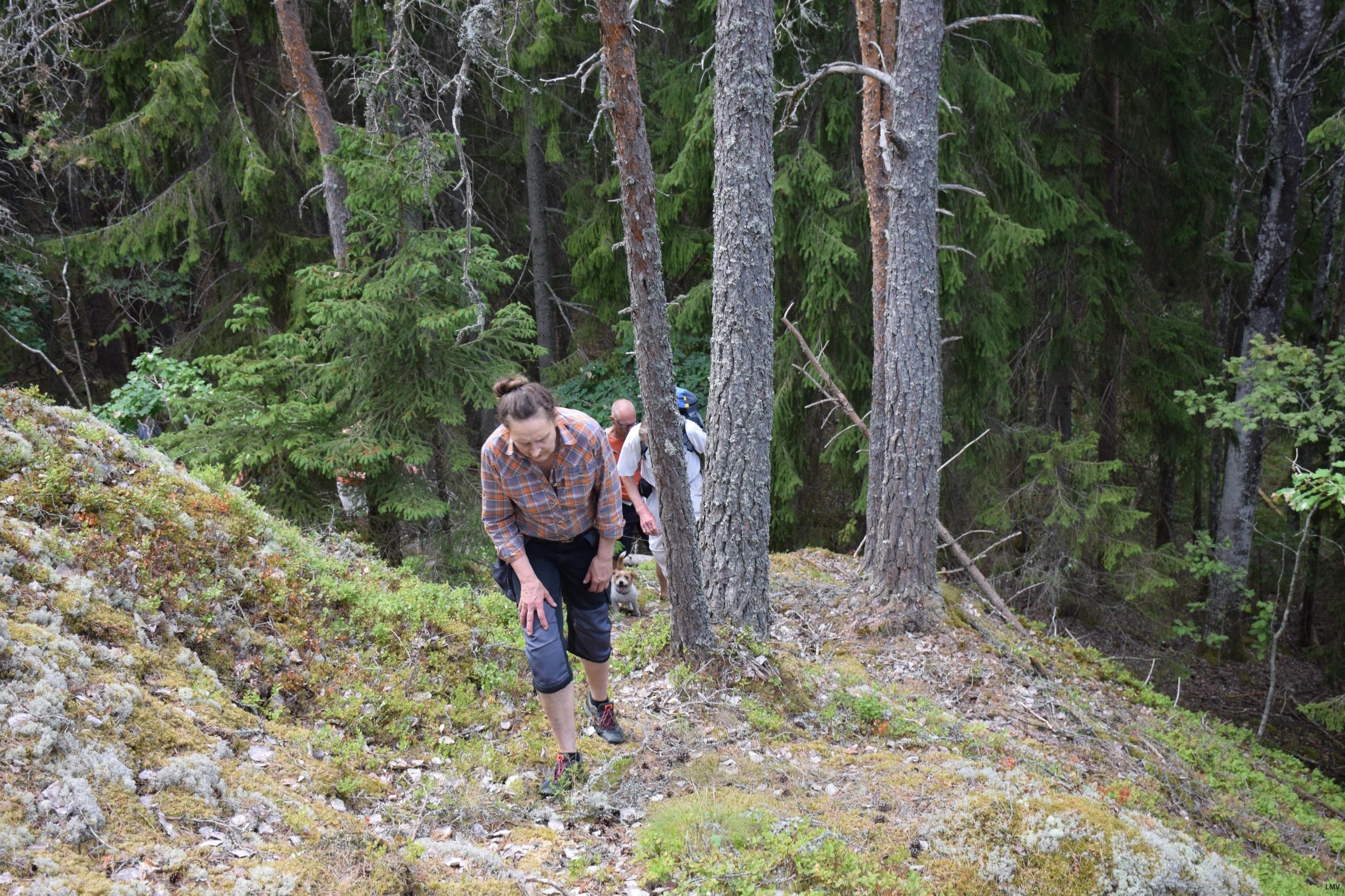 Holmen skog slar tillbaka