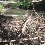 Bäverdämme uppströms Veda kvarn 180920