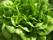 tlocksallad - Salanova grön