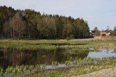 Sjöängen i maj, med det nya fågeltornet i fonden.      Foto: Eva Stenvång Lindqvist
