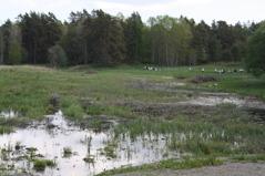 Vårpromenad vid Hemmesta sjöäng - i spetsen går faktiskt kungen! Från invigningen av sjöängen 26 maj 2014. Foto: Eva Stenvång Lindqvist
