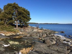 Kila, en bra utkikspunkt om man vill skåda sjöfågel. Foto Anders Haglund