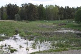 Hemmesta sjöäng. Foto: Eva Stenvång Lindqvist