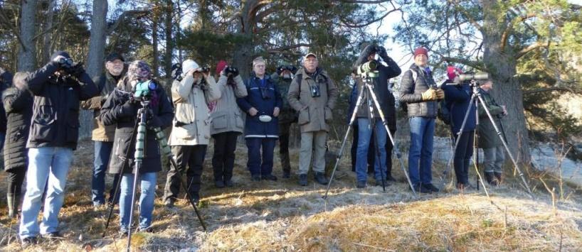 Exkursioner för våra medlemmar och intresserad allmänhet är en viktig del av vår verksamhet. Skådarmorgnarna vid Hemmesta sjöäng är säkskilt populära! Foto: Eva Stenvång Lindqvist