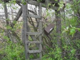 Obsboken med stegen upp till fågeltornet. Foto: Sören Bevmo