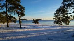 Från nyhetsbrevet - Björnö, bilden tagen under Artrallyt. Foto: Yvonne Blombäck.