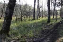Den värdefula sumpskogen har hotats av exploatering. Foto Eva Stenvång Lindqvist
