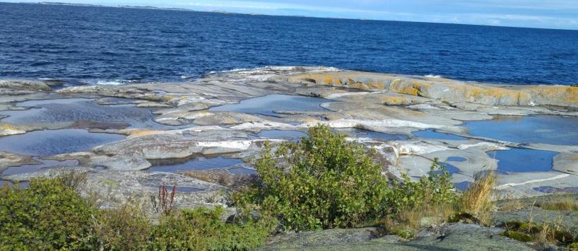 Hällkar och små lövbuskage möter havet. Foto: Yvonne Blombäck