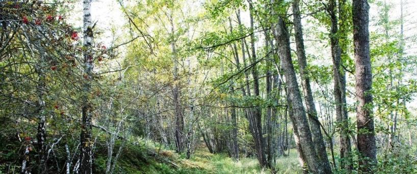 Lövskogarna bjuder på mycket fågelsång om våren. Foto Peter Olsson