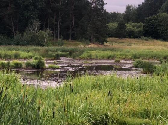 Fina vadarmarker har uppstått vid Hemmesta sjöäng. Foto 28 juli: Tom Arnbom