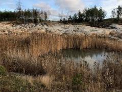 Den största dammen vid Farstatippen  - dock mycket liten...  Foto: Eva Stenvång Lindqvist