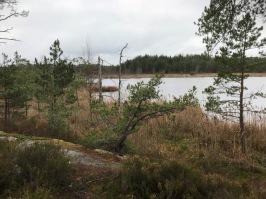 Långviksträsk, Ingarö. Foto: Eva Stenvång Lindqvist