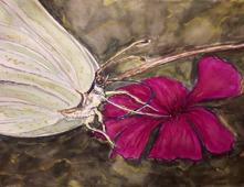 Citronfjärilen Akvarell 30x23