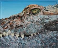 Krokodilens öga