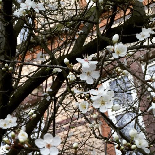 Spring flowers in Hamburg! =)