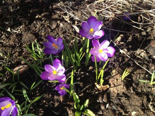 Spring flowers...!