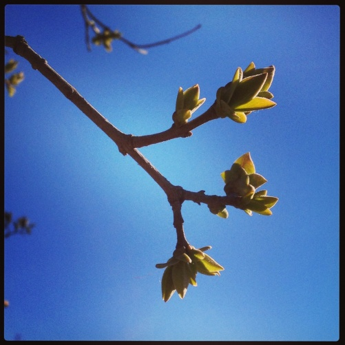 Beautiful Springtime!!