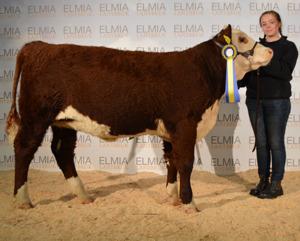 7436 Bårarps Super Donna visade av Christel Lysell som vann den äldre gruppen showmanship köttrasungdom.