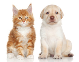 hundvalp & kattunge