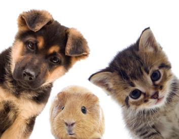 smådjur hund & katt