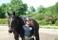 Dressyrkurs på Segersta Equestrian 2015
