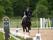Glad häst och ryttare