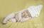 Nyfödd Newborn Familjefotograf Bebis Fotograf Michaela Edlund Kelas Bilder Stockholm 4