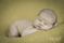 Nyfödd Newborn Familjefotograf Bebis Fotograf Michaela Edlund Kelas Bilder Stockholm 10