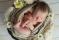 Nyfodd_newborn_fotograf_Michaela_Edlund_Leia-6 kopiera
