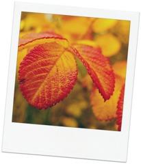 Härliga hösten