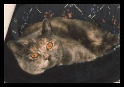 Suncat's Petite Fleur f 1985