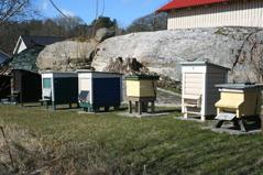 Djäknegårdens honung - Bisafari och Möhippa/Svensexa