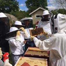 Djäknegårdens honung - Bisafari, vad finns i kupan?