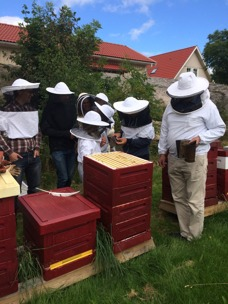 Djäknegårdens honung - Bisafari, alla kan vara med, stora som små.