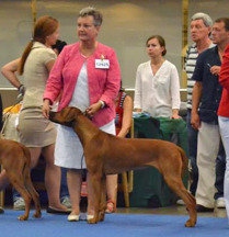 Akka at World Dog Show 2014 Helsinki