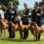 Best breedergroup