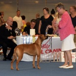 World Dog Show Helsinki 14