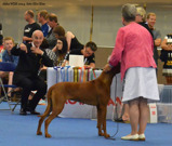 World Dog Show in Helsinki 2014
