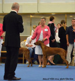 Akka at the World Dog Show