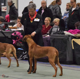 Norwegian Winner Show in Oslo 2014